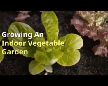 Tips on Growing an Indoor Vegetable Garden