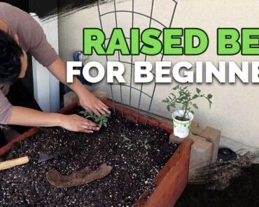 Raised Bed Gardens for Beginners