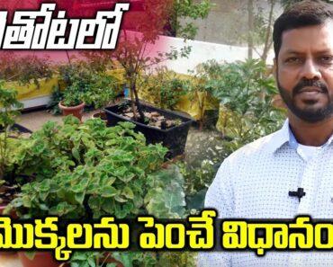 Best Tips for Terrace Garden Beginners || Narsimha Raju ||