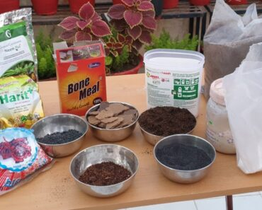 All Fertilizers that I Use