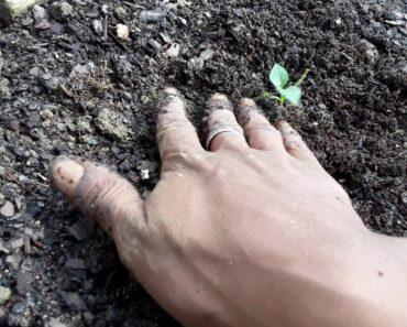 PEPPER SEEDS Planted – My GARDEN