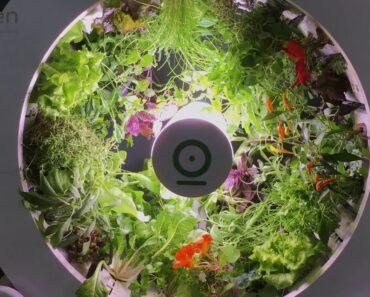 OGarden Indoor Gardening System NewsWatch Review