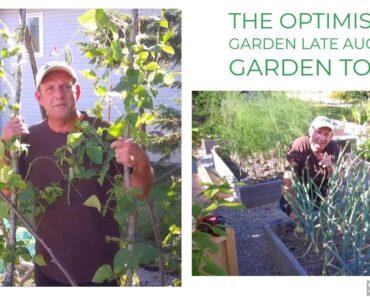 The Optimistic Gardener