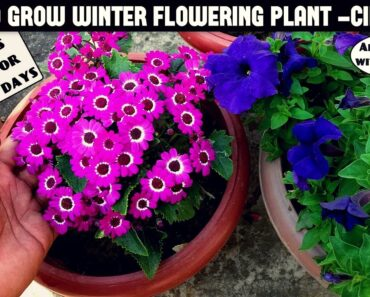 This Flower Lasts For 30-40 Days-All Care Tips With Updates
