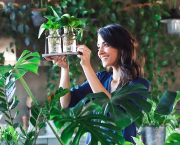 Plant propagation for beginners » 5 indoor plants
