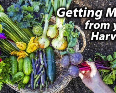 How to get Extra from Your Vegetable Garden