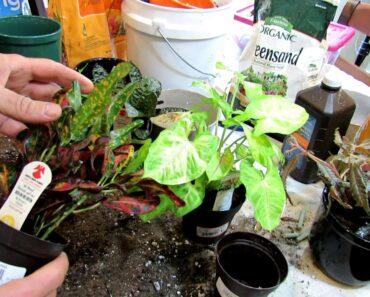 Buying Healthy Houseplants and Lighting & Potting Basics: Houseplants &