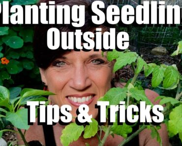 How to to Plant Vegetable Seedlings in the Garden –