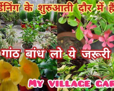 पौधों की अच्छी देखभाल के सबसे सही तरीके/ gardening tips