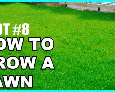 DIY: Yard/Lawn Restoration