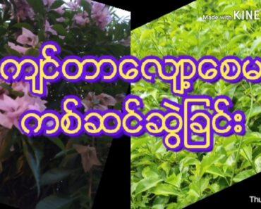 Basic Flowers Garden Tips For Beginners
