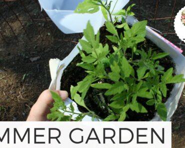 Planting the Summer Garden: Cut Flower Farm Gardening for Beginners