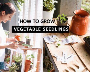 How to Grow Vegetable Seedlings