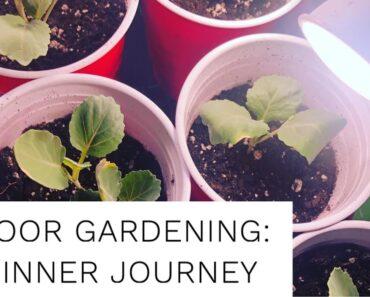 Indoor Gardening: Beginner Journey