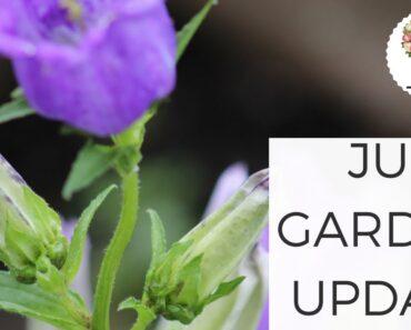 June Garden Tour Update: Cut Flower Farm + Vegetable Garden