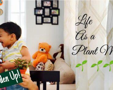 Indoor Plants in malayalam || Best plants to grow indoor|