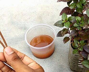 Improvement iron deficiency of plants