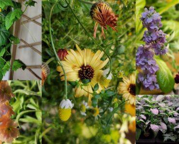My Indoor Hydroponic Garden