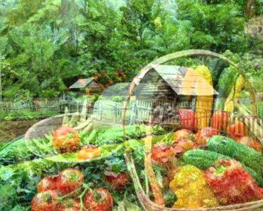 Organic gardening organic gardening for beginners