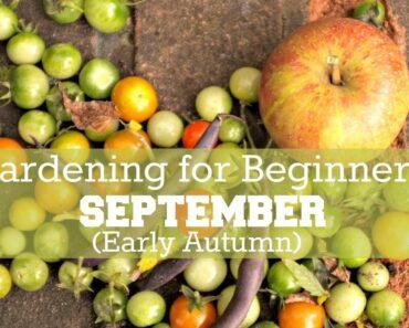 Gardening for Beginners: September Early Autumn