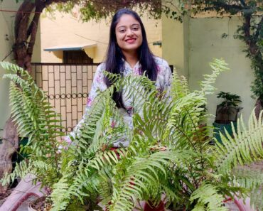 Fern plant care in Hindi