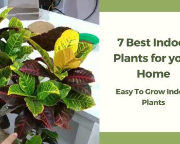 7 Best Indoor Plants for Beginners