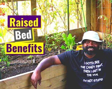Raised Beds Benefits