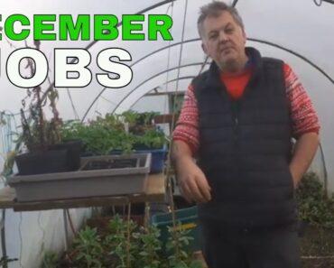 Allotment Jobs For December | Allotment for Beginners