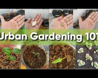 How to Start Urban Gardening for Beginners (Part 1) ||