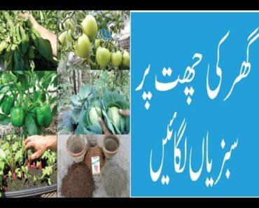 How to Terrace Vegetables Garden Tips and Tricks easy gardening