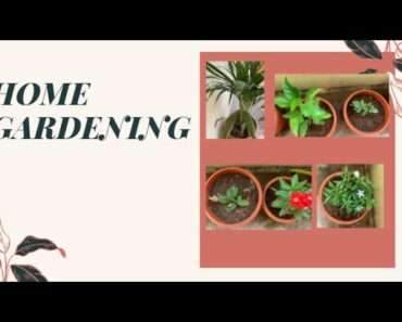 Home Gardening Blog|Home Garden|Home Gardening Ideas For Beginners (Update -1)