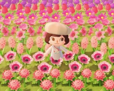 The Island with the Reddit Famous Flower Field