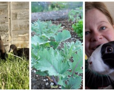 Keeping Critters OUT of the Garden + Our New Pet