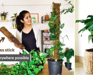 How and Why You should use Moss Stick for Indoor