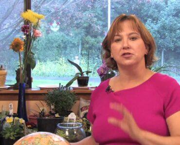 Flower Gardens : How to Grow Spider Flowers (Cleome Hasslerana)