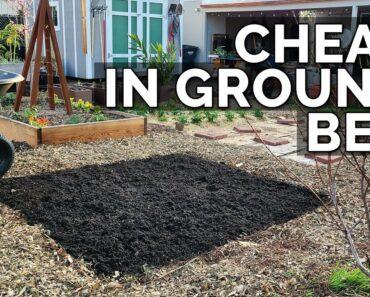 Expanding the Backyard Garden! ️
