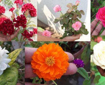 Flower Garden Tour