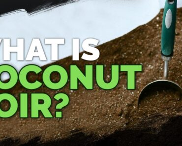 Coconut Coir: What it is and How To Use It
