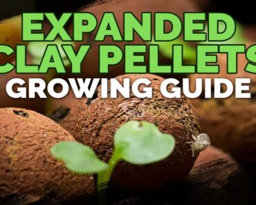 Expanded Clay Pellets (Hydroton) Growing Guide