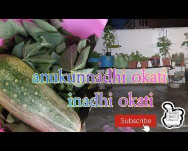 Gardening blog, anukunadhi okate indhi mari okati,garden works with my