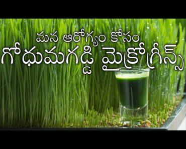 How to grow micro greens 2# wheat grass juice healthy#