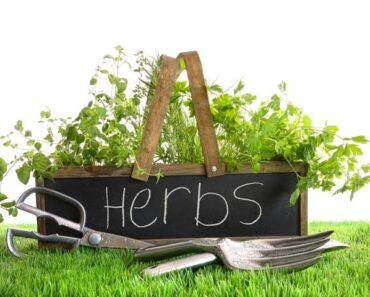Basics for Beginners: Fool Proof Herb Gardening