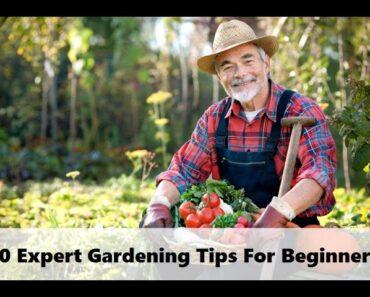 10 Expert Gardening Tips for Beginners
