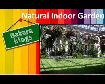 Natural Indoor Garden
