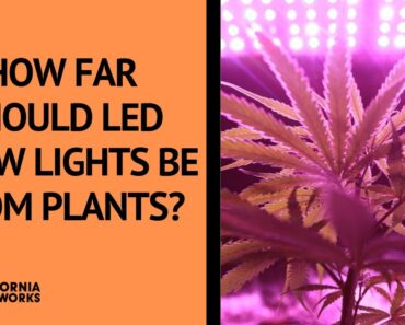 How Far Should LED Grow Lights Be From Plants? –