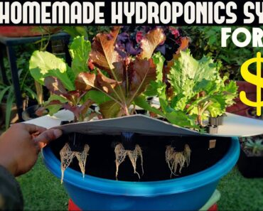 Cheapest Hydroponic System For Everyone