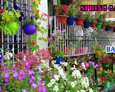 Beautiful Spring garden//renovation of varanda// sunday update,winter flowers+shade loving plants