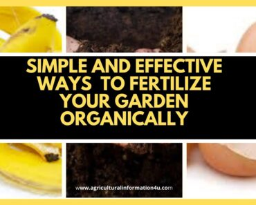 Simple and Effective Ways to Fertilize your Garden Organically |