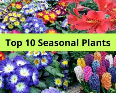 Top 10 Seasonal Flower plants in India, by Garden Gyan