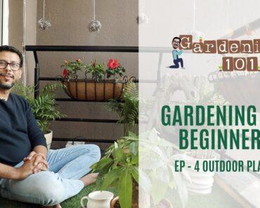 Gardening for Beginners Episode 4 Outdoor Plants